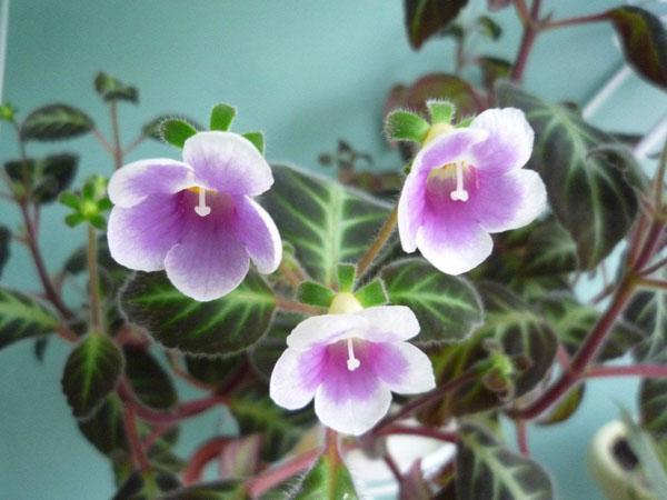 Фото комнатных цветов и домашних растений!