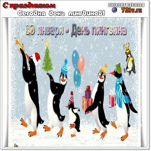 """Картинки с праздником 20 Января """"С днем пингвинов""""!"""